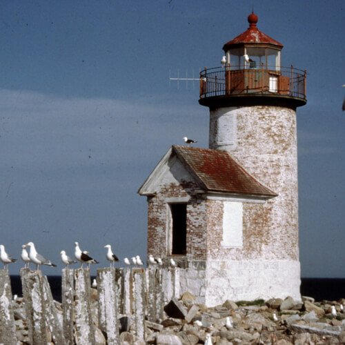 Seagulls sitting on pier in front of lighthouse